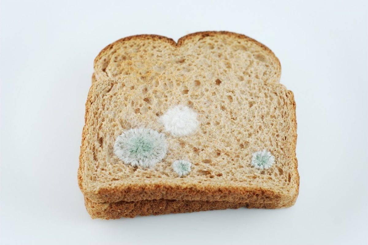 نان کپک زده باعث بروز سرطان می شود