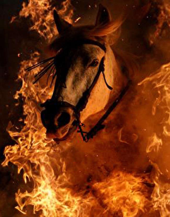 (تصاویر) جشن اسپانیایی عبور اسبها از آتش