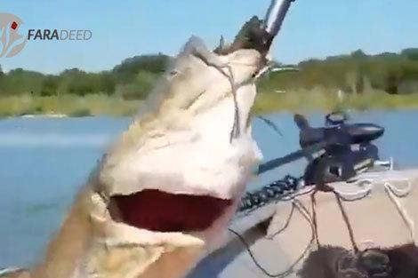 نجات گربه ماهی