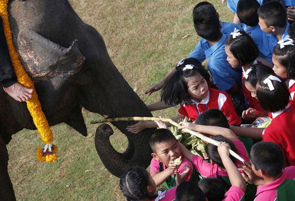(تصاویر) مسابقات خیریه چوگان با فیل در تایلند