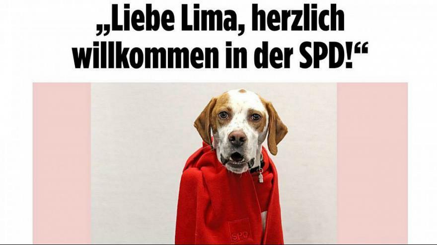 (عکس) این سگ نامزد انتخابات آلمان شد