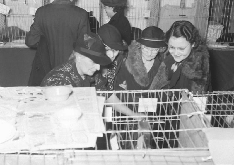(تصاویر) سال 1316نمایشگاه گربهایرانی در شیکاگو