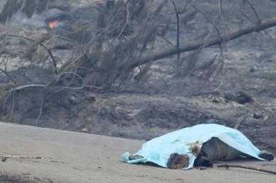 (تصاویر) آتشسوزی مرگبار در جنگلهای پرتغال