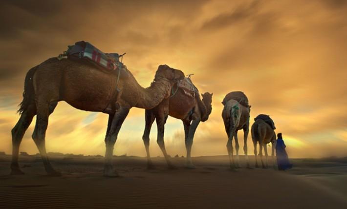 (ویدیو) عربستان شتر های قطری را هم اخراج کرد!