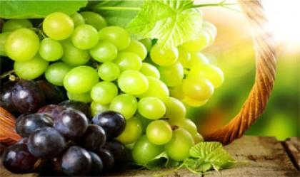 ترکیبات انگور موجب نابودی سلول های سرطان روده می شود