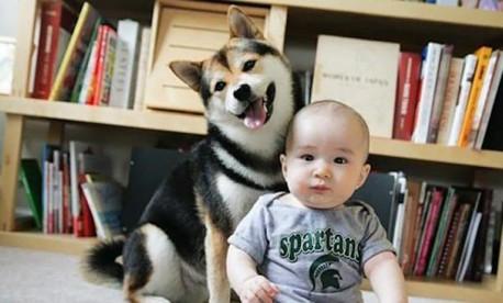 (ویدئو) وقتی بچه با کمک سگ می خواهد در یخچال را باز کند!