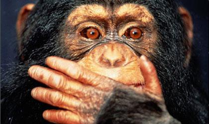 چرا میمونها نمیتوانند صحبت کنند؟