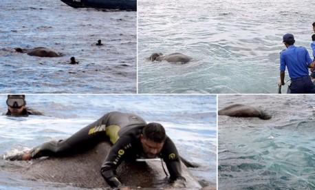 (ویدئو) نجات فیل از غرق شدن در دریا توسط نیروهای امداد