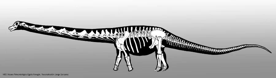 (تصاویر) بزرگترین دایناسوری که پا به زمین گذاشت