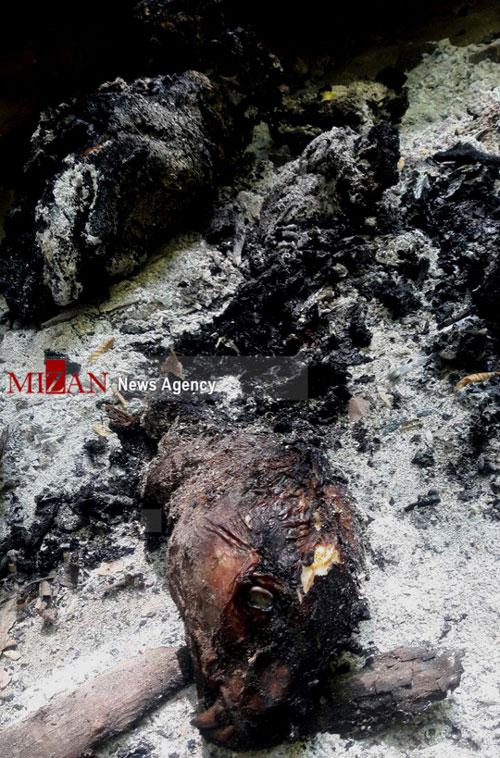پیگیری حادثه سوزاندن پلنگ ماده در مازندران