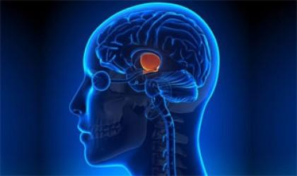 راز زندگی طولانی در مغز قرار دارد
