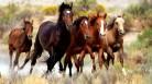 (ویدئو) گرانترین اسبهای جهان