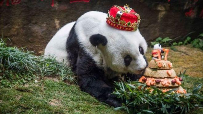 مرگ پیرترین پاندای جهان در چین +(تصویر)