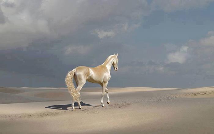 (تصاویر) زیباترین اسب جهان