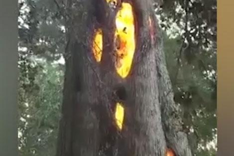 درختی که از درونش شعلههای آتش زبانه میکشد