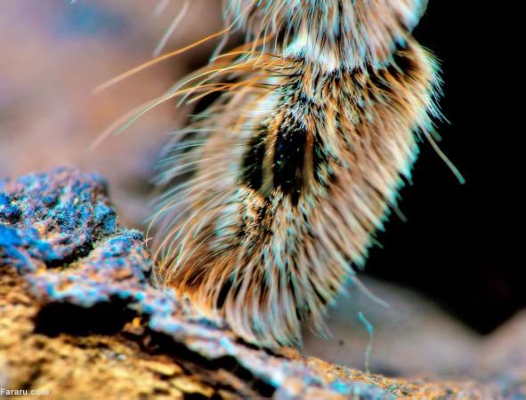 (تصاویر) عکاسی از پای عنکبوت!