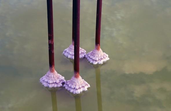 (تصاویر) دریاچه ارومیه 36 کیلومتر مربع کوچکتر شد