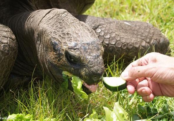 (تصاویر) پیرترین حیوان جهان با 185 سال سن