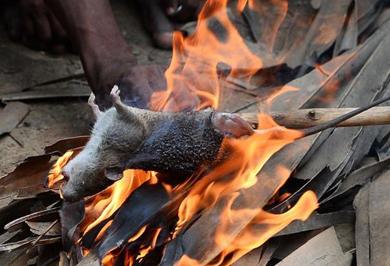 (تصاویر)کشاورزان هندی موش میخورند!