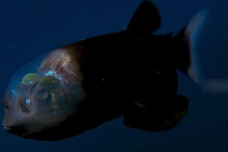 ماهی عجیب در عمق 200متری دریا