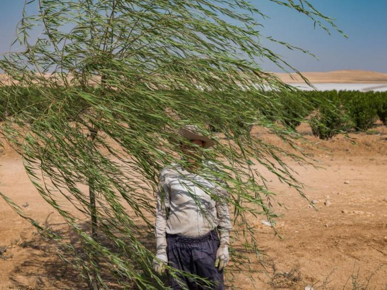 گزارش نشنال جئوگرافیک درباره دریاچه ارومیه