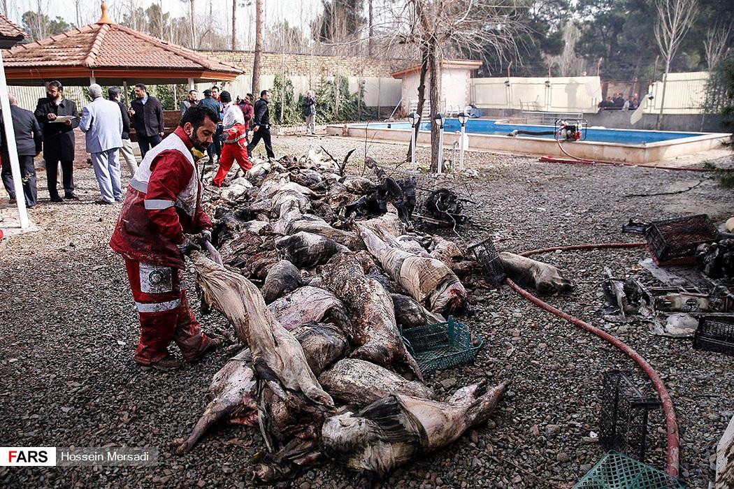 (تصاویر) گوشتهایی که در هواپیمای سانحهدیده سوخت!