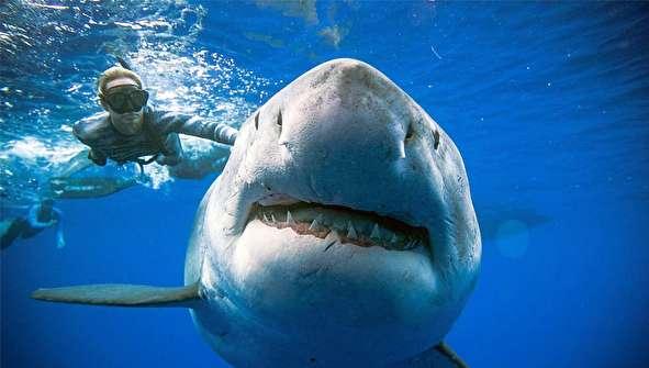 (تصاویر) شنای دلهرهآور زن غواص با کوسه عظیمالجثه