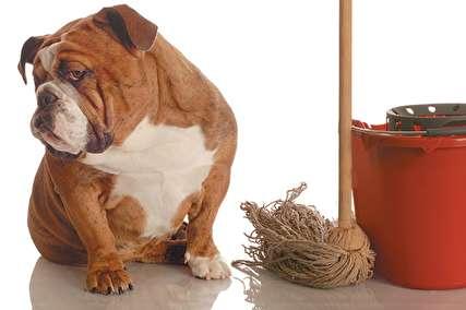 خانه مناسب برای نگهداری از حیوانات خانگی