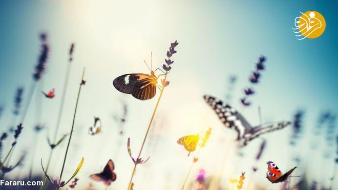 خطر رشد حشرات آزارنده در محیط زیست