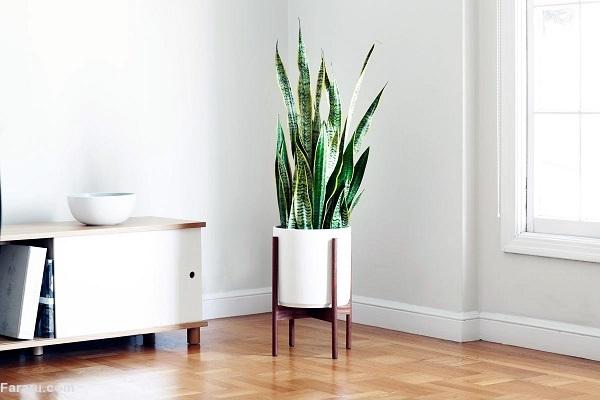 چه گیاهانی را در اتاق مان نگهداریم