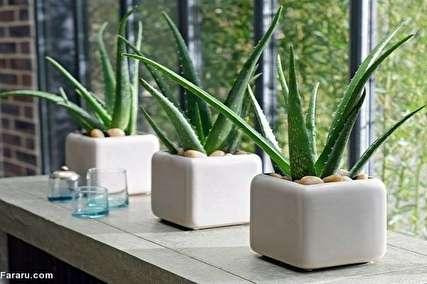 چه گیاهانی را در اتاق خوابمان بگذاریم؟