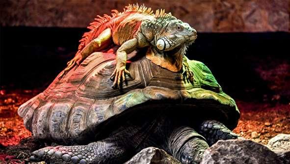 (تصاویر) برترین تصاویر هفته حیوانات