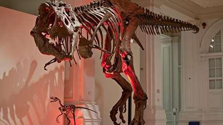 سر هم کردن دایناسور غول پیکر در موزه تاریخ طبیعی آمریکا