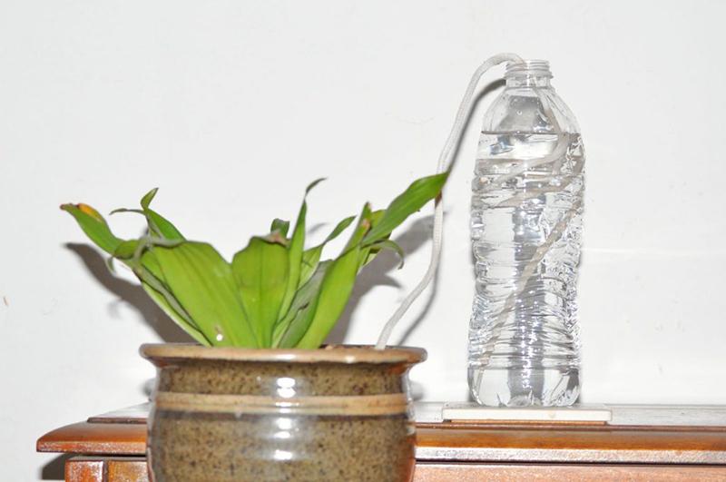 چگونه در زمان سفر گیاهان خود را آبیاری کنیم؟