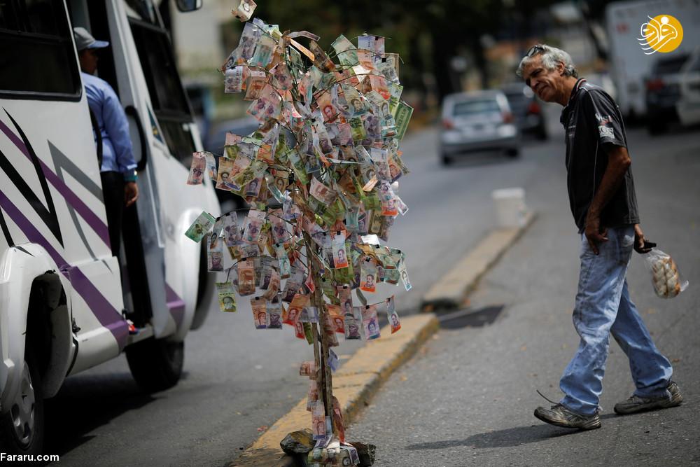 (تصاویر) درختِ پول در ونزوئلا!