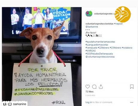 گرسنگی در ونزوئلا؛ میلیونها سگ و گربه در خطر خورده شدن!