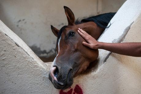 یک اقدام عجیب: کشتن اسبهای کولبران!