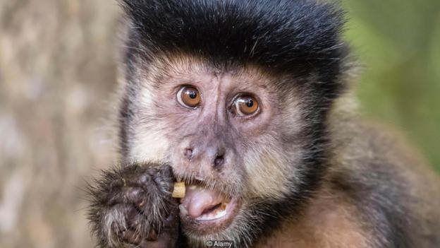 میمونها چه چیزی میتوانند درباره پول به ما یاد دهند