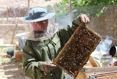 (تصاویر) فروزان، دختر زنبور دار افغان