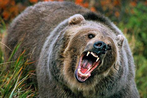 صحنههای جذاب از زندگی خرس گریزلی