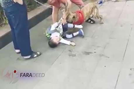 (ویدئو) حمله ناگهانی سگ به پسربچهای در خیابان