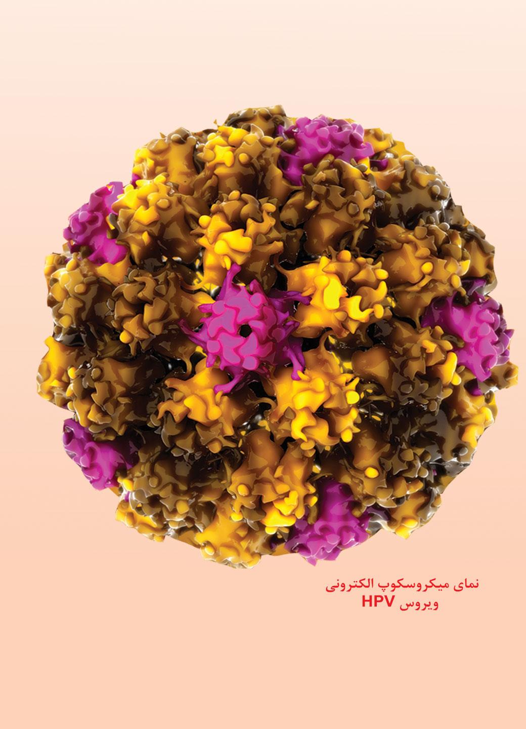هشدار نسبت به شیوع بالای ویروس HPV در ایران