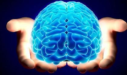 (ویدئو) موادغذایی مفید برای حفظ سلامت مغز