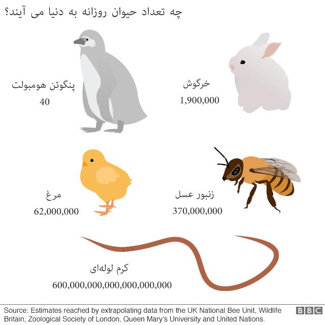 هر روز چه تعداد حیوان به دنیا میآیند؟