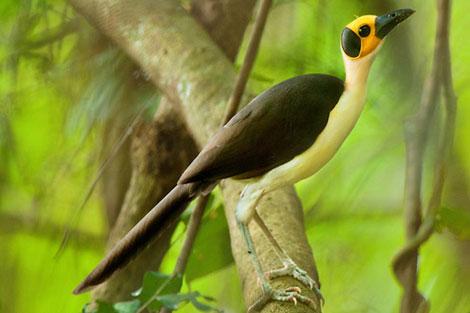 پرندهای که از ۴۴ میلیون سال پیش روی زمین زندگی میکند