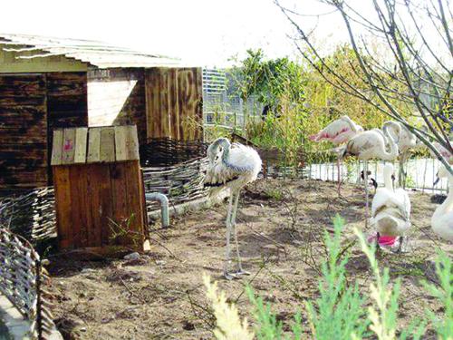 کشف موارد عجیب و غریب در باغ وحش مشهد!