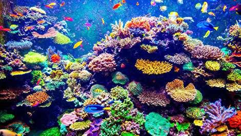 (ویدئو) زندگی مرجانهای دریایی