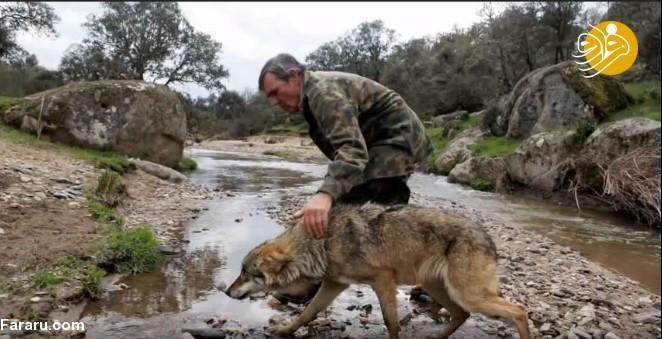 (تصاویر) روایت باورنکردنی از زندگی مردی که در جنگل توسط گرگها بزرگ شد