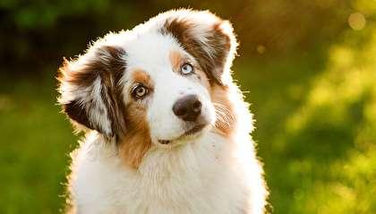 هوش سگ تفاوت خاصی با بقیه حیوانات ندارد