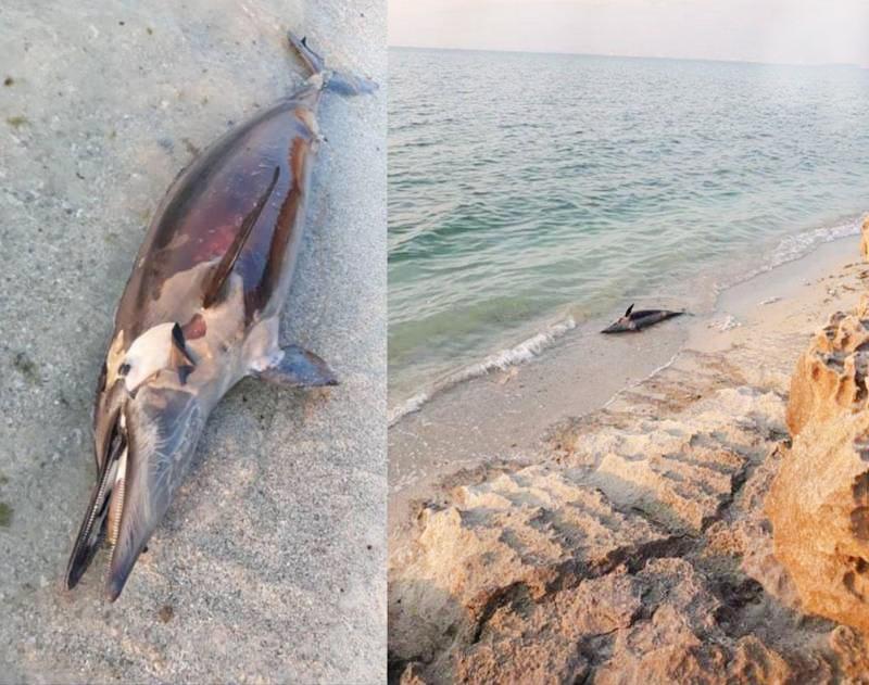 تلف شدن دلفین در سواحل عسلویه